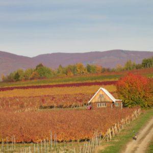 Vinohrad Filipová - jeseň